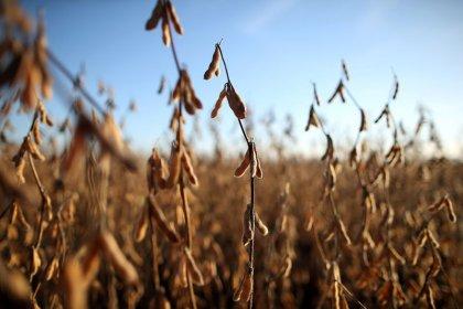 Brasil está pronto se China remover tarifa sobre soja dos EUA, diz Maggi