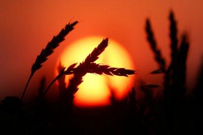 هيئة الرقابة الزراعية الروسية تزور العراق وتبحث إمدادات القمح
