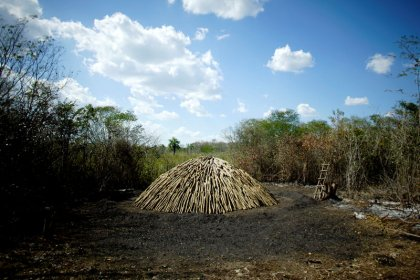 Amazon sued for marketing charcoal produced on land seized by Cuba in 1960s