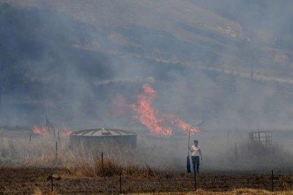 حرائق الغابات تستعر على طول الساحل الشرقي لأستراليا