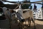 Exportação de carne bovina do Brasil tem volume e receita recordes em 2019, diz Abiec
