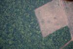 Brasil precisa de resultado concreto na queda do desmatamento, diz Mourão após reunião com empresários