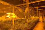 Exclusive: Canada eyes tighter rules for grow-your-own pot producers