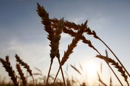 Chuvas colocam em risco safra 2018 de grãos na Rússia, diz Ministério da Agricultura