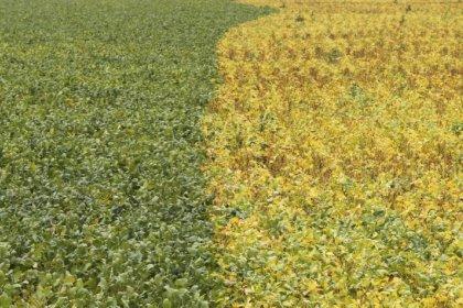Plantio de soja da safra 2017/18 do Brasil atinge apenas 0,3% da área, diz AgRural