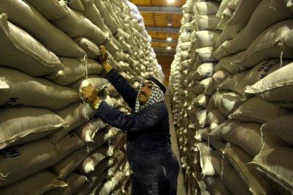 مصدر: الأردن يريد شراء 100 ألف طن قمحا في مناقصة جديدة