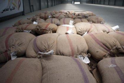 وزارة الزراعة: النيابة المصرية تأمر بغربلة شحنة قمح روماني
