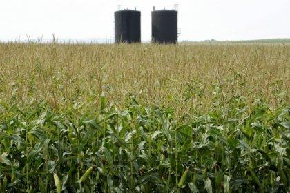 HINTERGRUND-Volle Lager, sinkende Preise - Braucht die Welt den Turbo-Mais?