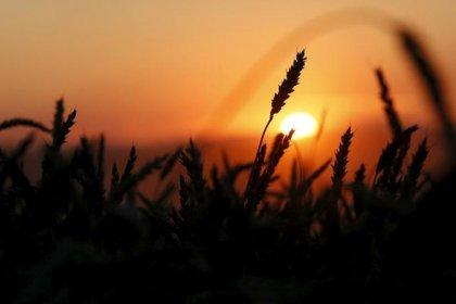 Хорошая погода повышает шансы высокого урожая зерна в РФ и на Украине