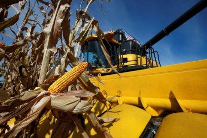 Corn-state senators seek Trump meeting as U.S. biofuel changes loom