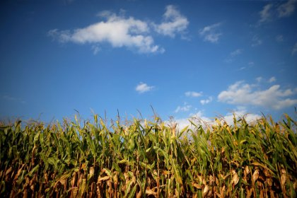 U.S.-China trade row sows confusion in farmer planting plans