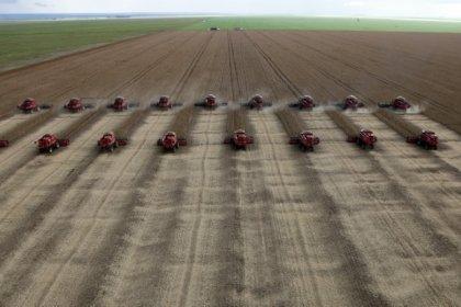 Brasil direciona quase 80% da exportação de soja para China de janeiro a agosto