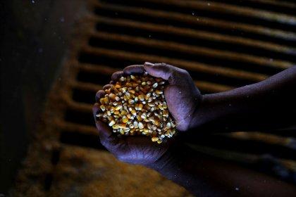 BRF vê crescente competição por milho com indústria de etanol, busca alternativas