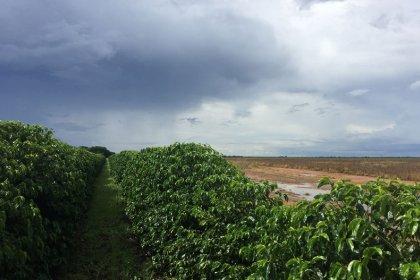 BBM lança novos indicadores de preços de produtos agrícolas