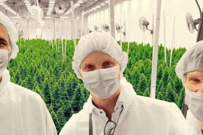 Una firma danesa de cannabis busca aprovechar en su salida a bolsa el apetito inversor