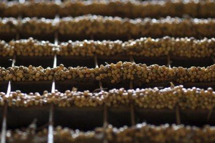 AgRural estima safra de soja do Brasil em recorde; aponta início precoce do plantio