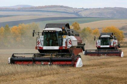 Россия отправит в Бразилию вторую партию пшеницы в 26-30 тысяч тонн в октябре