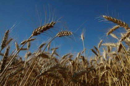 Урожай зерна на Украине в 2018 году может достичь рекордных 68 млн тонн -- министр