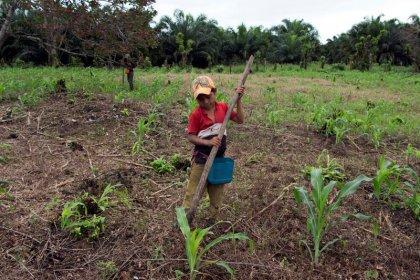 ENFOQUE-El aceite de palma alienta la emigración en Guatemala