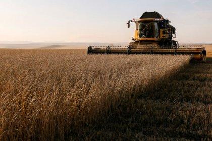 أسعار القمح الروسي ترتفع وسط طلب قوي