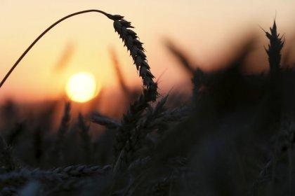 Минсельхоз РФ хочет создать сильную ассоциацию экспортеров, не исключая иностранцев