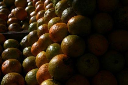Produção de suco de laranja do Brasil deve cair 27,5% em 2018/19, diz CitrusBR
