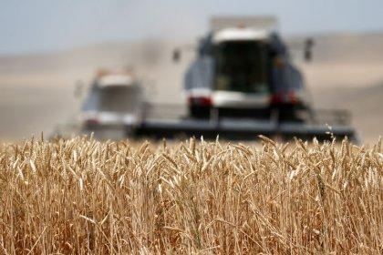 Экспортные цены пшеницы РФ снизились на прошлой неделе