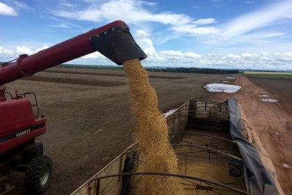 Exportação de soja do Brasil será de 70 mi t em 2019, queda de 17%, prevê Safras