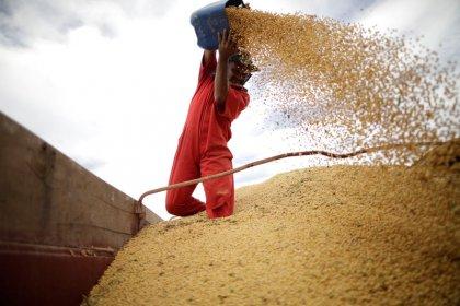 Alta do dólar impulsiona negócios de soja, diz Cepea