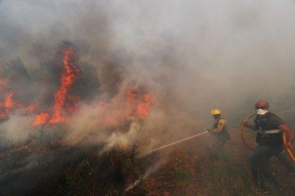 Violents feux de forêt dans le centre du Portugal
