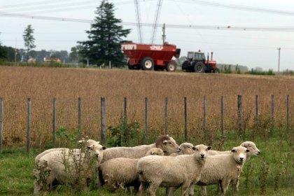 Ministério da Agricultura da Argentina suspende registros de exportações agrícolas