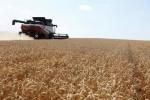 Сирия объявила тендер на закупку 200.000 тонн пшеницы из РФ -- трейдеры