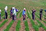 Tarım Ürünleri Üretici Fiyat Endeksi Kasımda %2,53 Arttı