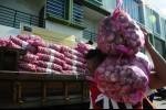 Program Pupuk Kaltim Genjot Produksi Bawang Putih di NTB