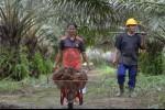 Manuver ke Laos, PTPN III Bakal Pasarkan Hasil Pertanian dan Kembangkan Perkebunan