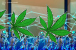 Presentan en Colombia software para seguimiento del cannabis medicinal con tecnología Blockchain