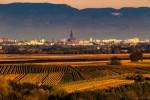 Vin: production UE en baisse de 14% en 2017, au plus bas historique