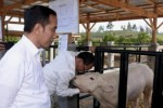 Jokowi Tidak Butuh Menteri Kaleng-Kaleng