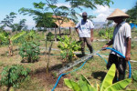 Wujudkan Clear and Clean Lingkungan, BSI Serahkan Lakom 100,32 Hektare
