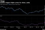 U.S. Cold Blast Menaces Winter Wheat, Cattle as Prices Climb