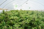 Should You Own Aurora Cannabis Inc. (TSX:ACB) and Aphria Inc. (TSX:APHA) Stock in Your Portfolio in 2019?