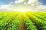 Cổ phiếu nông nghiệp, thủy sản hút tiền trong tuần qua