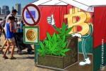大麻が仮想通貨のライバルに?ウォール街で話題に