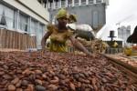 Cacao: la Côte d'Ivoire maintient à 700 FCFA par kilo le prix d'achat garanti aux producteurs