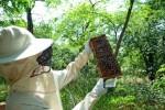 Abeilles: les apiculteurs inquiets d'un