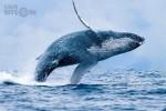 """""""Cá voi"""" Mt. Gox công bố số liệu bán cuối cùng: Bán tháo 4 tháng với tổng giá trị lên đến 230 triệu USD"""