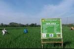 Regulasi Kondusif Dorong Peningkatan Ekspor Komoditas Pertanian RI
