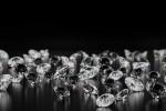 """Diamanti meno """"opachi"""" grazie all'utilizzo della tecnologia blockchain"""