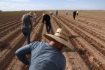 Trump Administration Proposes New Agriculture Immigration Rules