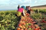 Türk Organik Sektörü 2023 Yılında 2.5 Milyar Dolar İhracat Hedefliyor